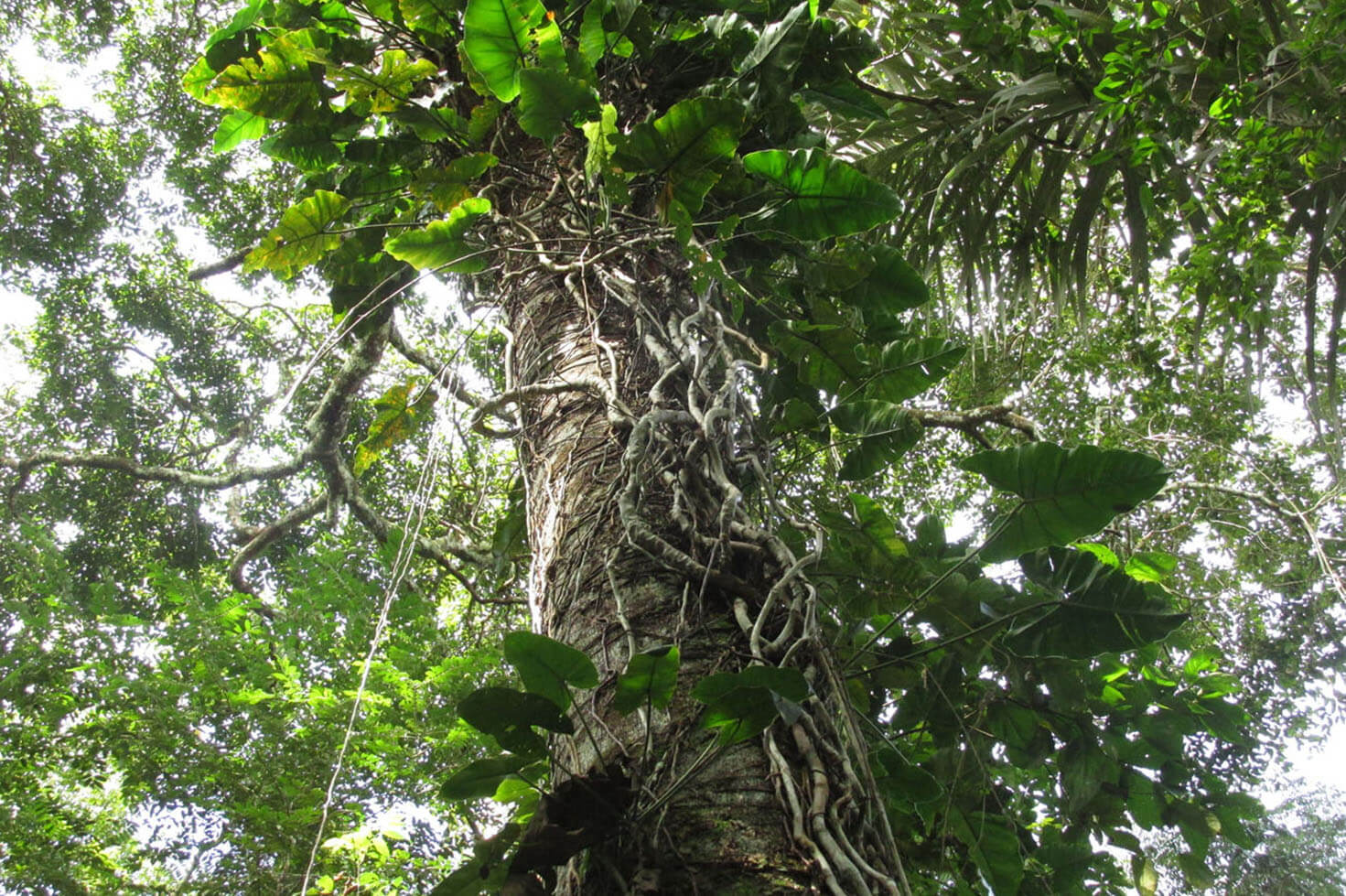 Nature Travels - Amazon Forest