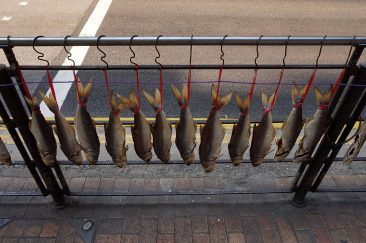 Fish drying on the street
