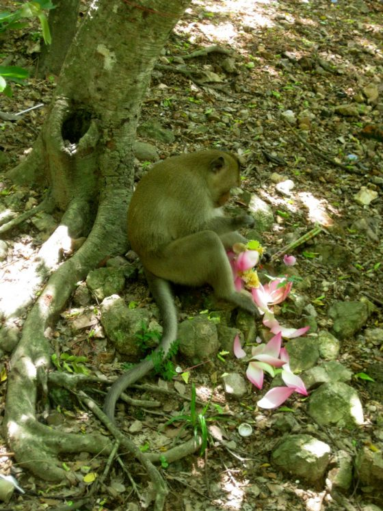 Monkey playing with a flower