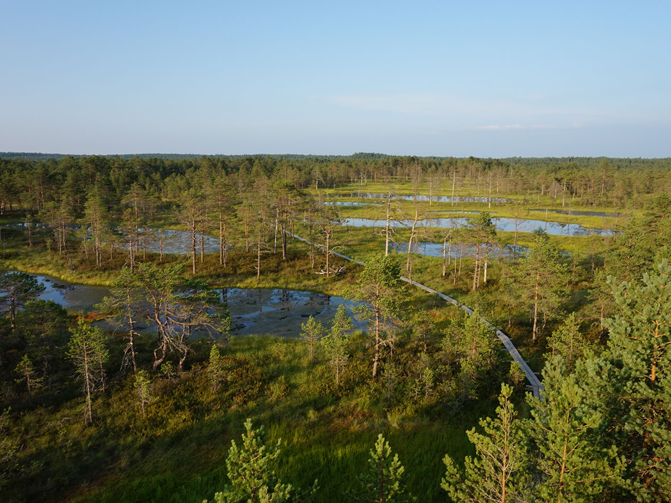 Lahemaa National Park - View from the watchtower